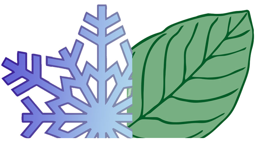 Image of winter snowflake changing to green leaf for spring